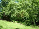 -Lot 2 Lakewood, Vincennes, IN 47591