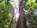 Marjorie: Impressive 394 acre Property for sale in Upala - Alajuela, with literally tons of natural, Aguas Claras, Alajuela